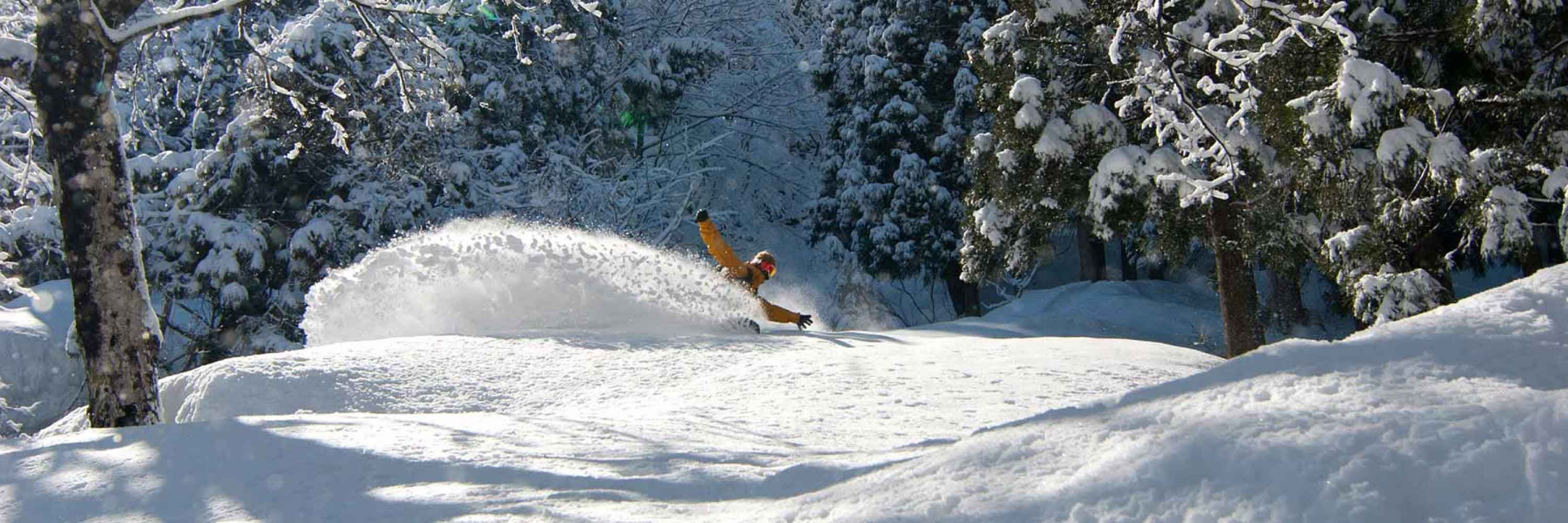face shots for days in hakuba
